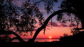 在树的桃红色日落在湖 库存图片