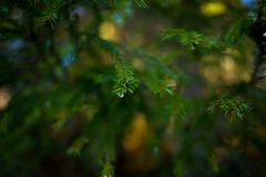 在树的水下落 免版税库存照片