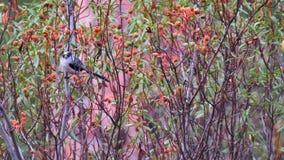 在树的水户Â长尾的山雀 库存图片