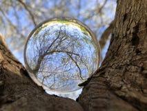 在树的水晶球 库存图片