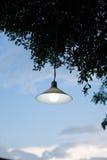 在树的灯 免版税库存照片
