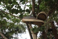 在树的灰色运动鞋 库存照片