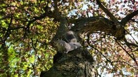 在树的灰鼠 库存照片