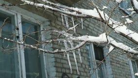 在树的特写镜头冰柱在冬天 影视素材