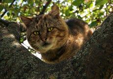 在树的猫与明亮的黄色眼睛 免版税库存照片