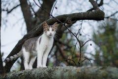 在树的猫狩猎 免版税图库摄影