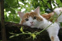 在树的猫 免版税库存照片