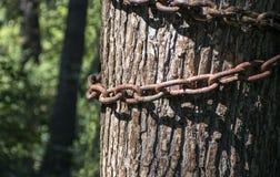在树的生锈的链子 库存图片