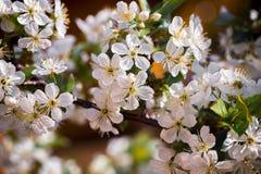 在树的白色小花 免版税库存图片