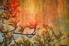 在树的白色木兰开花 免版税库存图片