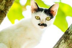 在树的白色猫凝视 免版税库存照片