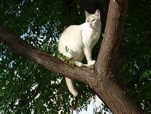在树的白色猫 免版税库存图片