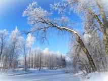 在树的白色霜,立陶宛 免版税库存图片