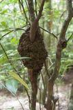 在树的白蚁巢 库存图片