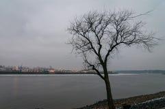 在树的看法没有叶子在Koehlbranddeich的冬天在汉堡,德国,观看在Koehlbrand 免版税库存照片
