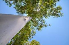在树的看法 免版税库存图片