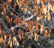 在树的秋叶本质上 免版税库存照片