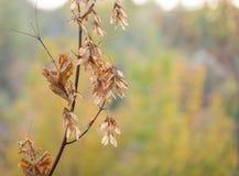 在树的秋叶本质上 免版税库存图片