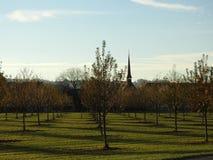 在树的秋天叶子 免版税图库摄影