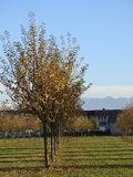 在树的秋天叶子 图库摄影