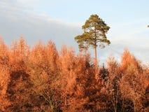 在树的秋天叶子 库存照片