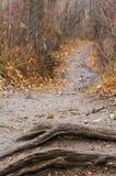 在树的秋天道路 免版税库存照片