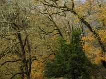 在树的秋天颜色 库存照片