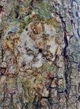 在树的简单的吠声 最了不起的雕刻家和艺术家是自然 自然奇迹迷住想象力 免版税库存照片