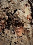 在树的简单的吠声 最了不起的雕刻家和艺术家是自然 自然奇迹迷住想象力 免版税库存图片