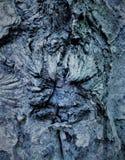 在树的简单的吠声 最了不起的雕刻家和艺术家是自然 库存照片