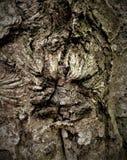 在树的简单的吠声 最了不起的雕刻家和艺术家是自然 免版税图库摄影