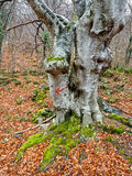 在树的箭头 免版税库存图片