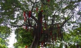 在树的红色灯笼吊 免版税库存图片