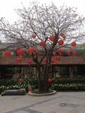 在树的红色灯笼 免版税图库摄影