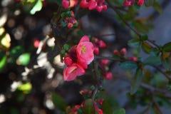 在树的红色花在河宏观射击的银行 免版税库存照片