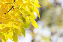 在树的美丽的叶子在秋天 库存照片