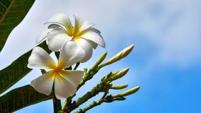 在树的美丽的白花 库存照片