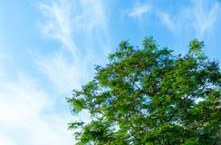 在树的美丽的蓝天 库存照片