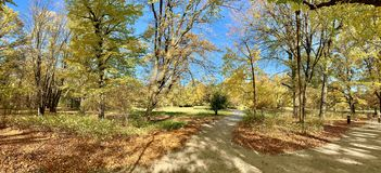 在树的美丽的闪电在下降时间 免版税库存照片