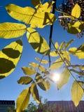 在树的美丽的闪电在下降时间 库存照片