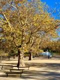 在树的美丽的闪电在下降时间 图库摄影