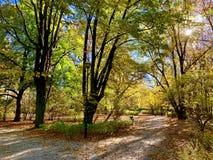 在树的美丽的闪电在下降时间 免版税图库摄影