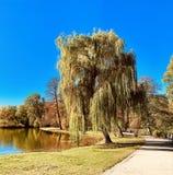 在树的美丽的闪电在下降时间 免版税库存图片