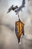 在树的老叶子 免版税库存图片