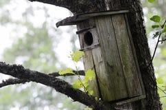 在树的老木鸟舍 免版税库存照片