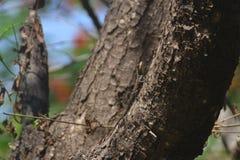 在树的背景021蜥蜴 库存照片
