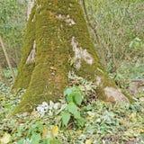 在树的脚 免版税库存照片