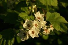 在树的花在日落 免版税库存照片