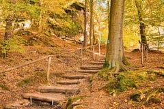 在树的蓝色旅游路标在导致Kokorin城堡的木楼梯附近在Kokorinsko风景区域在秋季捷克republ 免版税图库摄影
