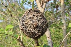 在树的蚁丘 库存照片